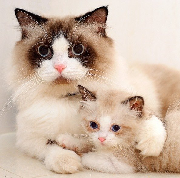 Love this pic, what a beautiful mama #cat.