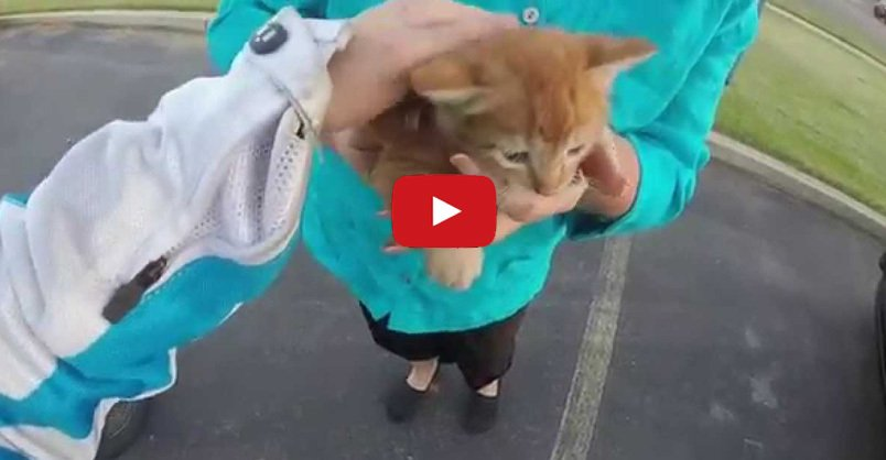 Motorcyclist Ran into Busy Intersection and Saved a #Kitten CLICK to watch >