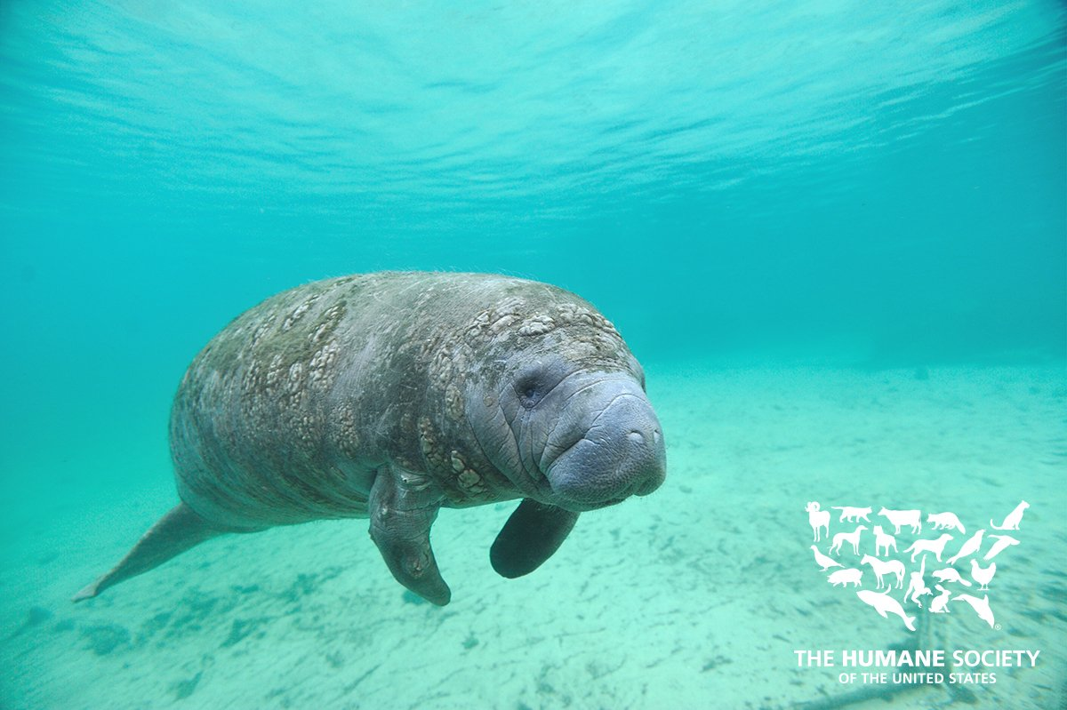 Happy #ManateeAppreciationDay to our sea friends! Here's how you can h...