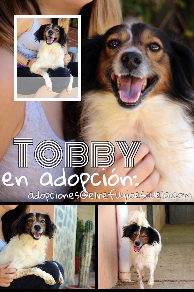 Tobby es una ricura en #adopción:  https:// goo.gl/QwawtU  &nbsp;   ¡#Simpatía, #alegría y #dulzura a partes iguales!<br>http://pic.twitter.com/2S2vlpQSH7