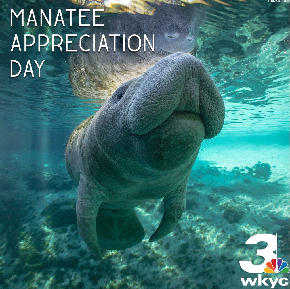 Today is #ManateeAppreciationDay. We love those adorable sea cows! htt...