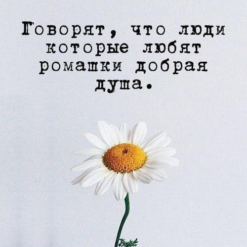 Картинка ромашки с надписями любишь не любишь, картинках для любимого