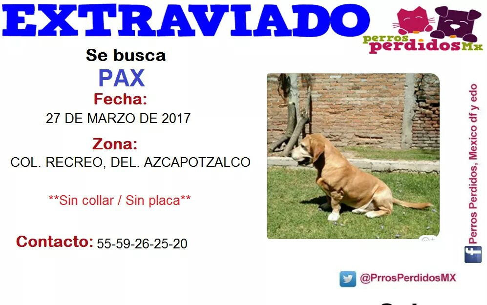 #SEBUSCA #PAX #RECREO #AZCAPOTZALCO @TodosSomosAzcap @AzcapotzalcoDF @Azcapotzalco_ @azcapo @PrrosPerdidosMX @sebuscaCdMx @Denuncia_Azcapo<br>http://pic.twitter.com/GQNSlyegwX