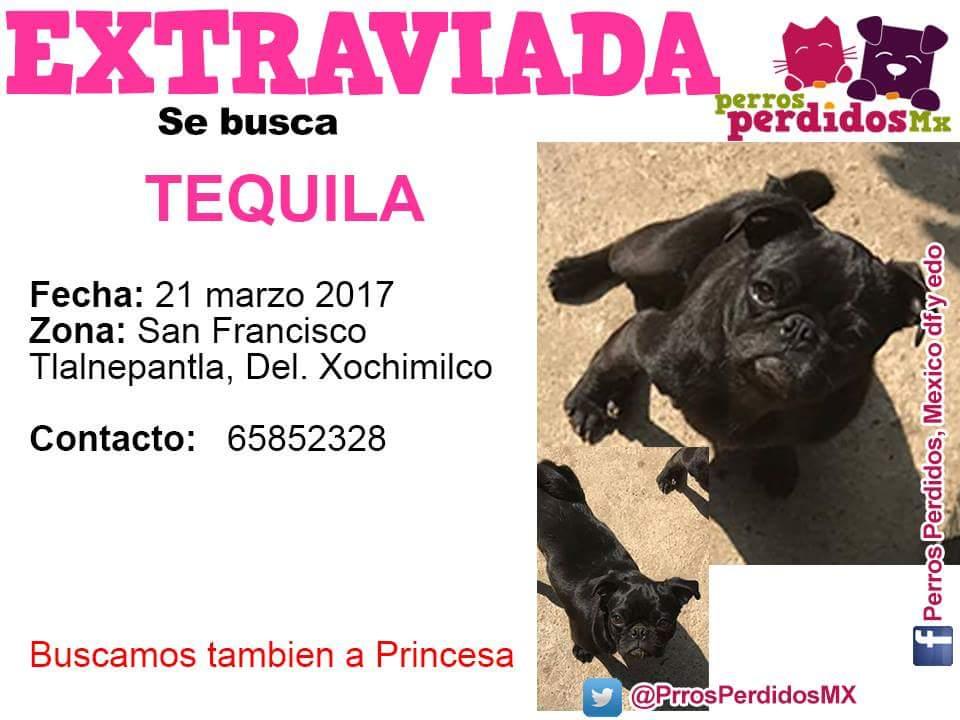 #SEBUSCA #TEQUILA COL #SanFrancisco Tlalnepantla  #XOCHIMILCO @PrrosPerdidosMX @PetBookMexico @sebuscaCdMx @CoapaXochimilco @Xochimilco_DF<br>http://pic.twitter.com/ew2NjwPQNa