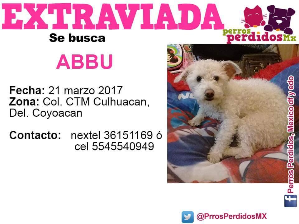 #SEBUSCA #ABBU#CTMCulhuacan #COYOACÁN @centrodecoyo @MascotaCoyoacan @PrrosPerdidosMX @PetBookMexico @ProAdoptacan @sebuscaCdMx @YipiLoc<br>http://pic.twitter.com/1cJidbhZYI