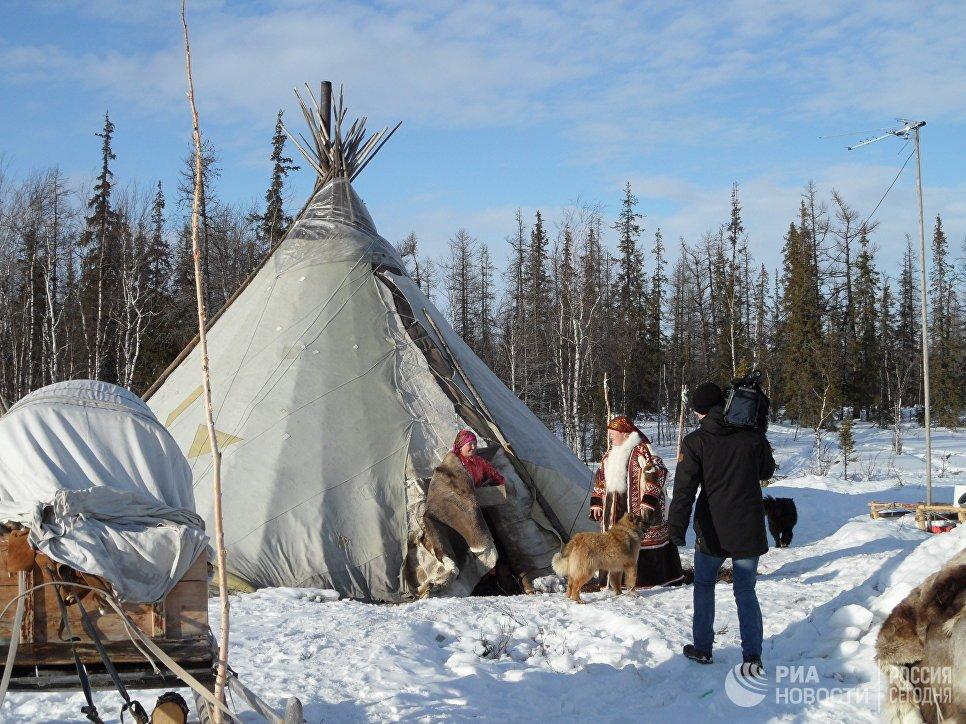 снегом новогодней фото коренных жителей тайги экземпляры собирались