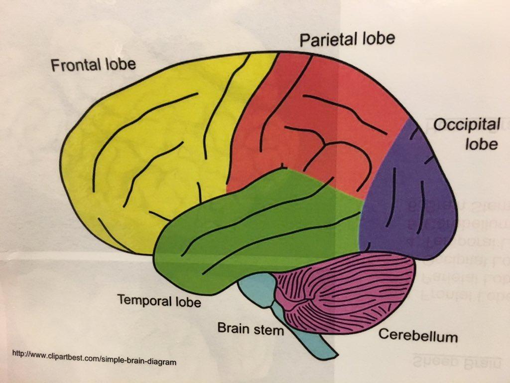 Michael Hotchkiss On Twitter Neuroscience Fair For Cseixacademy Brain Stem A Simple Diagram 1107 Am 31 Mar 2017