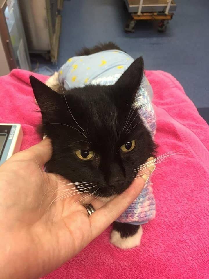 Aggressive New Kitten Dominating Older Cat