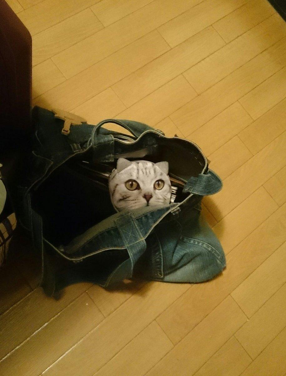 test ツイッターメディア - キャンドゥで買った猫ポーチが、カバンの中でリアリティー爆発してて怖かった #キャンドゥ #ニャンドゥ https://t.co/kadzynciWq