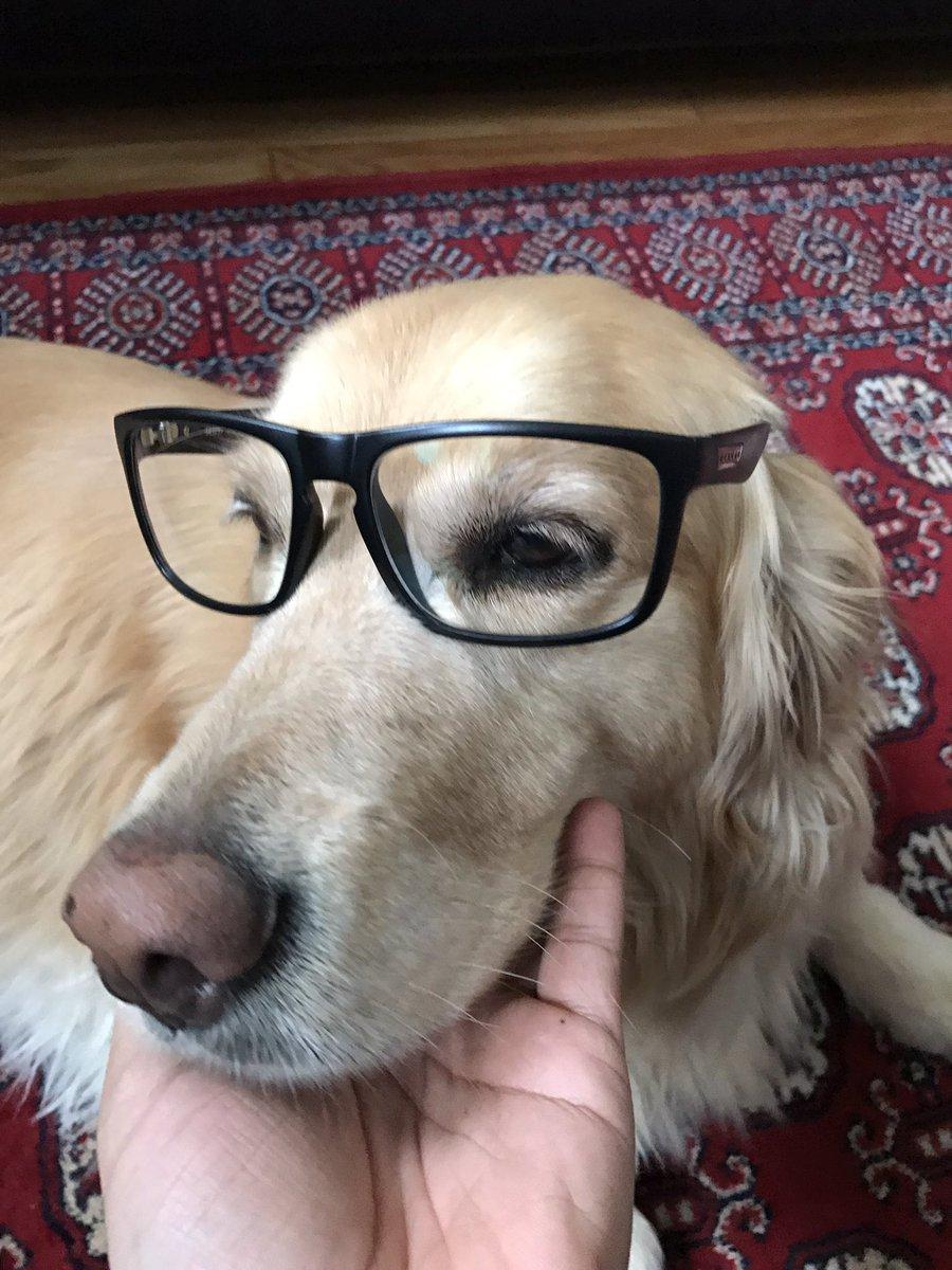 amber the gamer dog doggylovesgames twitter