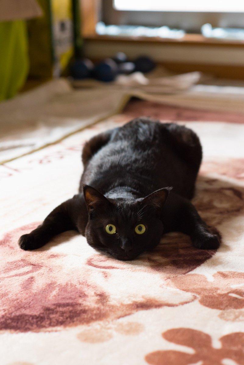 ホットカーペットの暖かさを全力で味わう猫の姿 pic.twitter.com/j0qPvsthD1
