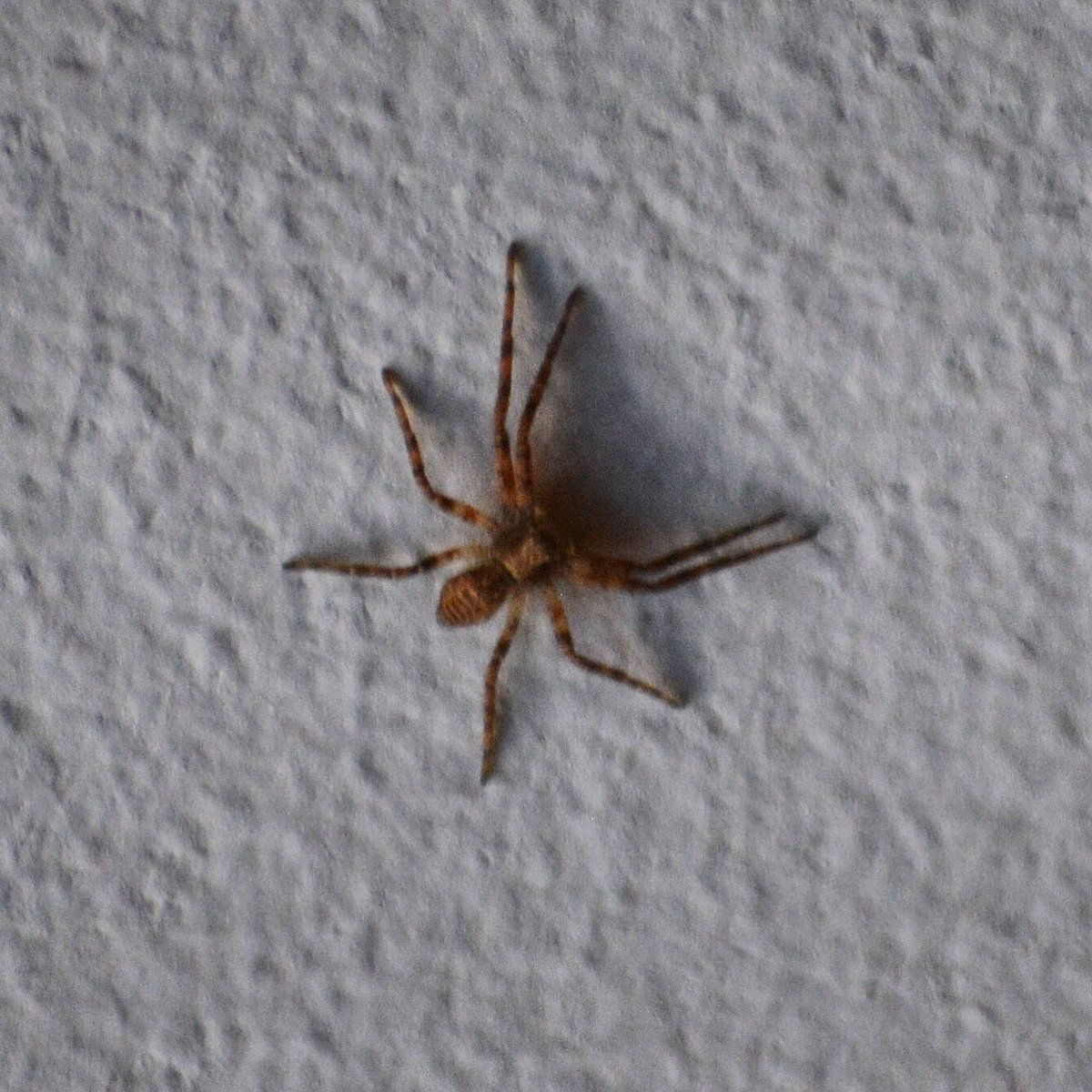 """brian wagner on twitter: """"tiny spider on the ceiling. #shiver"""