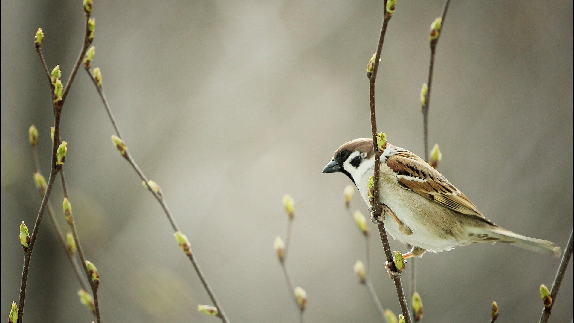 Открытка ранняя птичка