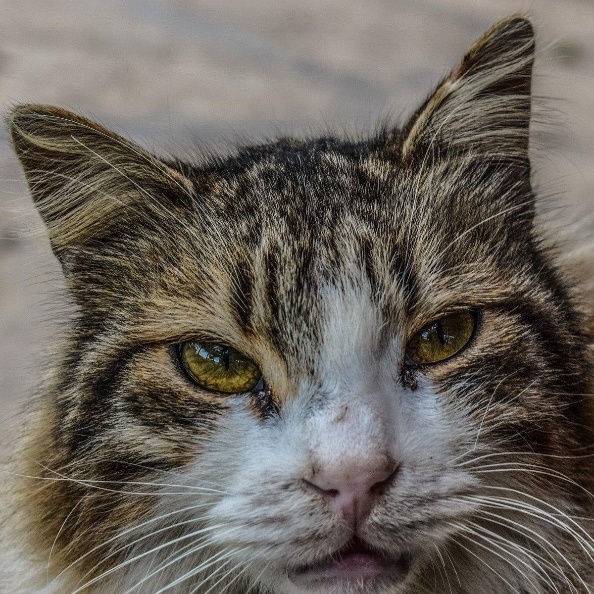 Can A Forgiving Get Feline Aids