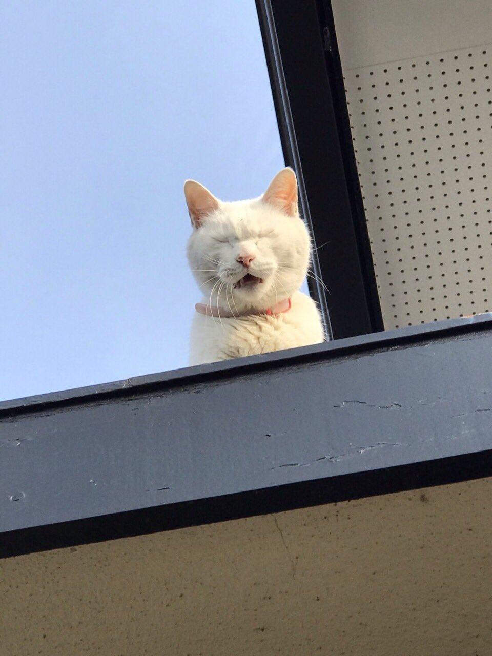 家に入れてもらいたいおキャット様wその切実さがにじみ出てる顔にウケる!