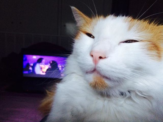 Meowijuana! 15 Cats That Are Higher Than You – High Times