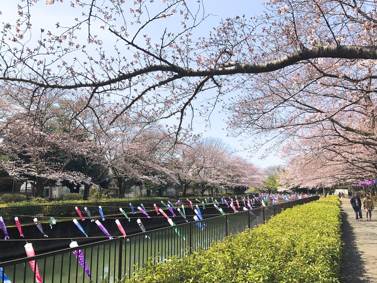 桜が咲き始めました(^^)  群馬県館林市 https://t.co/mGuiQ8eBTz