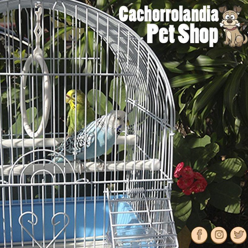 #Cachorrolandia #Dog #Veterinaria #Pet #Shop #Mascotas #RD #Peluquería #Asistencia#Aves #Alimentos #Atención #periquitos #australianos<br>http://pic.twitter.com/0MeouneAF0