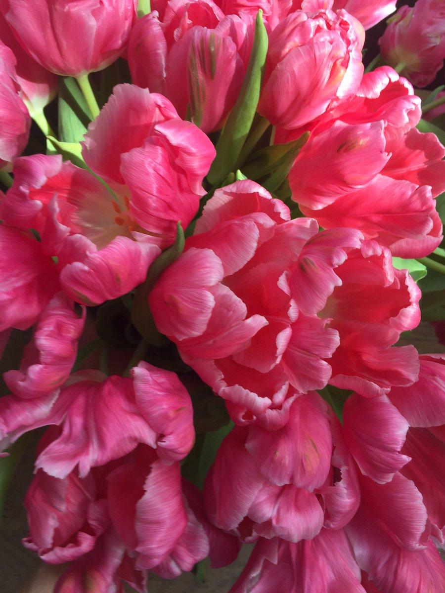 Flowerbx On Twitter Happy Sunday From Flowerbx Tulips Flowers