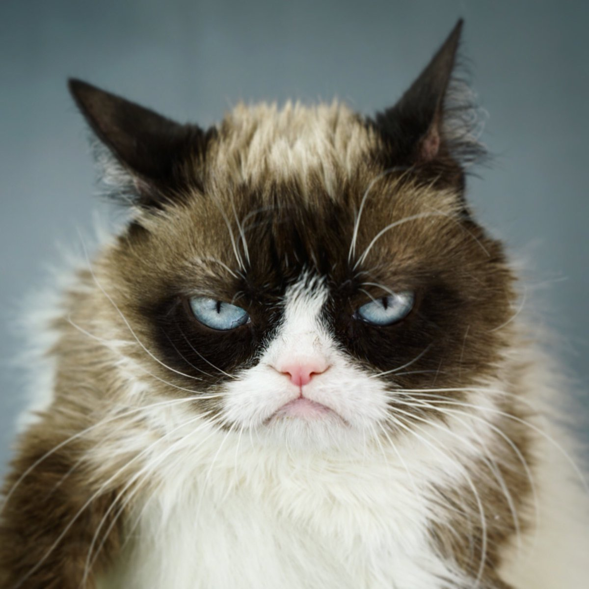 Where Can I Get A Grumpy Cat