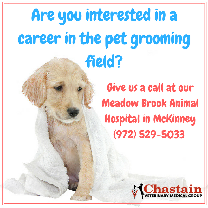 Groomers looking for jobs
