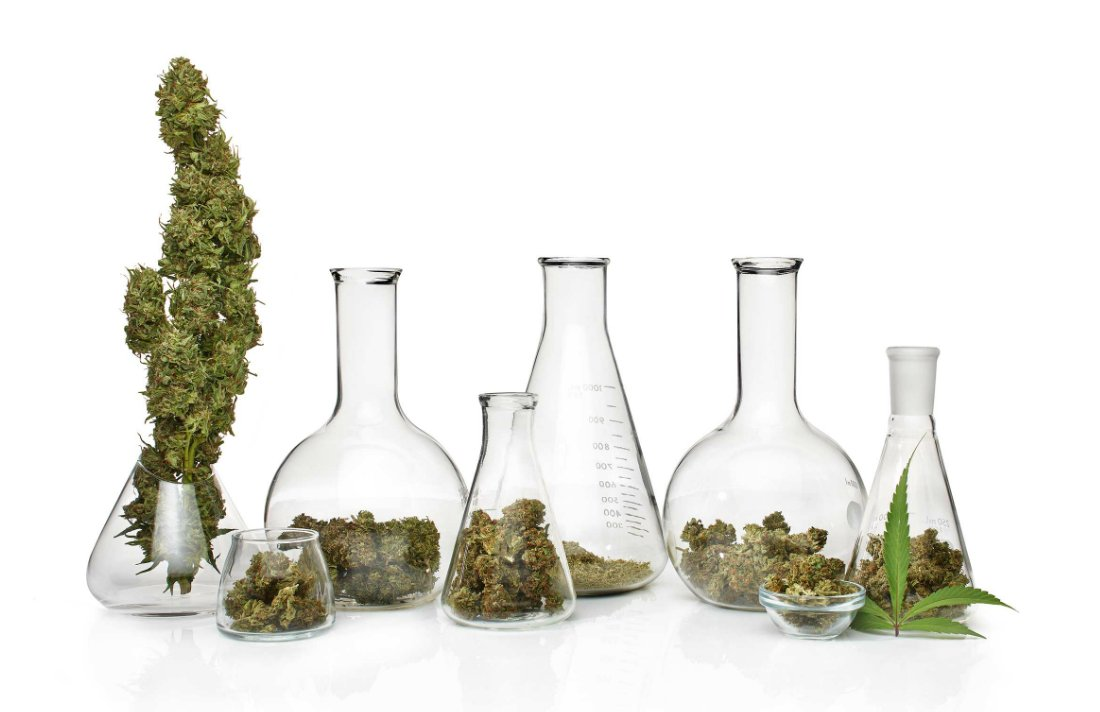 7 Reasons Why Cannabis Will Dominate the Wellness World in 2017
