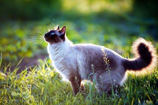 rt please🎈 💕 #markno 💕 #มาร์คกลัวแมว 💕https://goo.gl/oF9fKj 💕 - พาแมวไปเจอคุณปลา -  ขอบคุณค่า 🎈