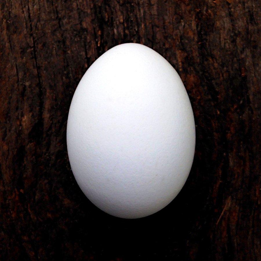 Twitterの卵アイコン廃止に伴いリアル卵アイコンを作る奴現るwww