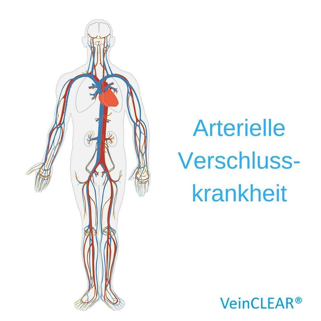 Groß Venen In Den Beinen Anatomie Ideen - Menschliche Anatomie ...