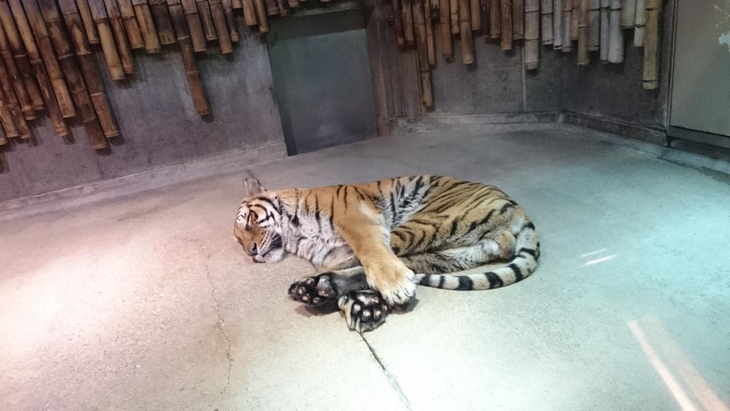 虎がなんかかわいい格好で寝てた pic.twitter.com/IZSRZLrMzx