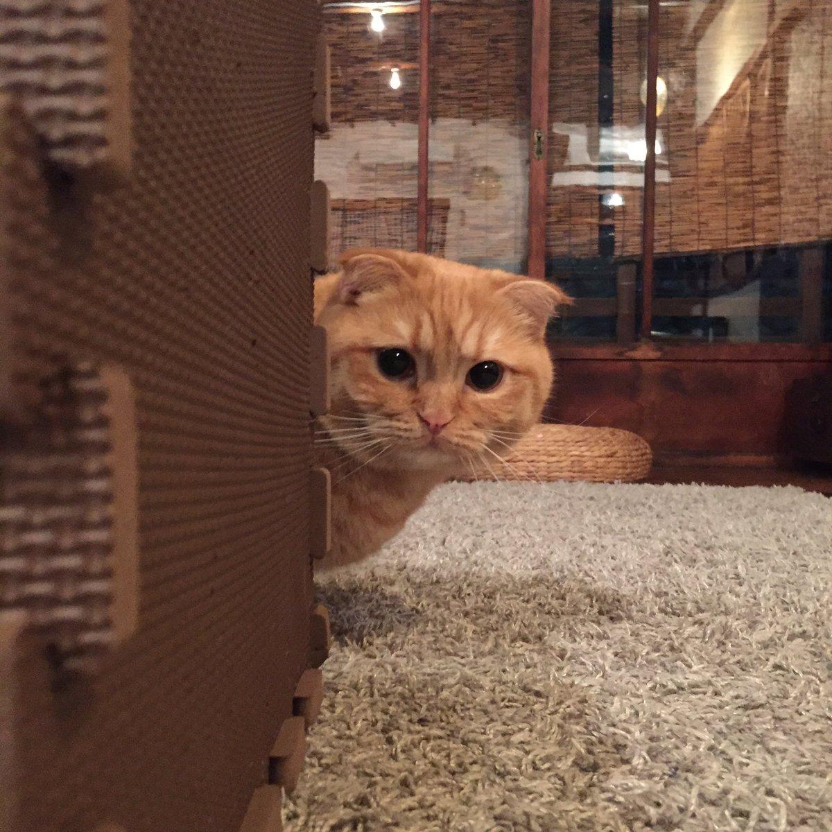 みんな、まだ起きてる?ウニちゃんはめっちゃ元気ねん。 pic.twitter.com/y9eVM3yW02