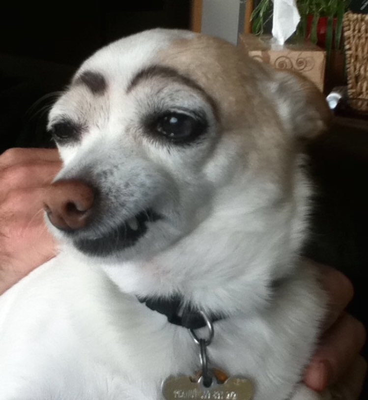 Dog Drag Queens On Twitter