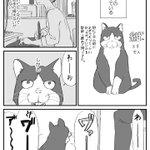 一体どうすれば?ビビりな猫の扱いは苦労するかも!