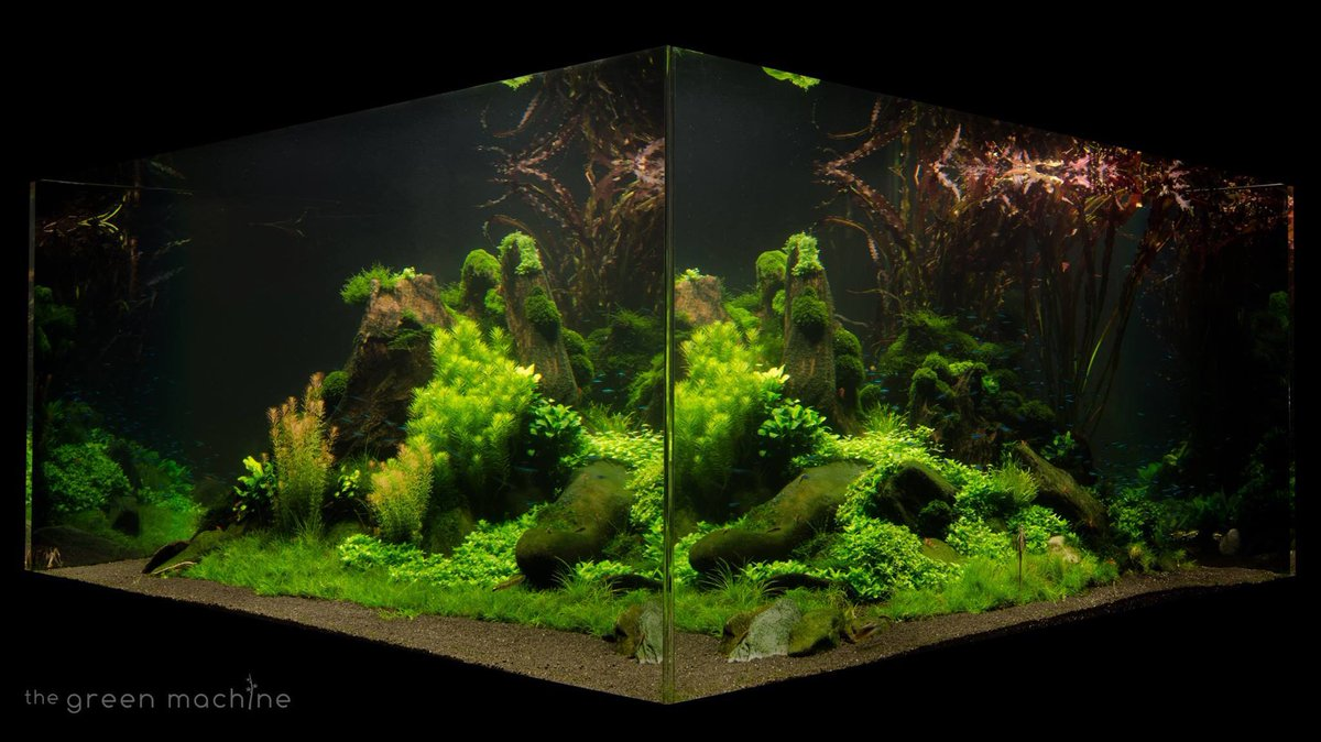 The Green Machine Aquascape - Aquascape Ideas