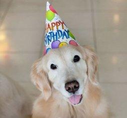 Happy birthday Zak