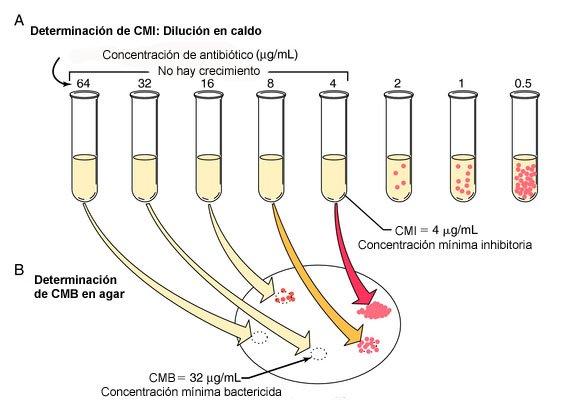 Mediante diluciones de antibiótico se calcula la CMI (concentración mínima inhibitoria) #microMOOCSEM2 https://t.co/9GJqnMQmeW