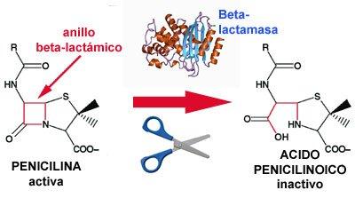 El mecanismo más importante de resistencia a beta-lactámicos es la producción de beta-lactamasas. #microMOOCSEM2 https://t.co/45jmRR9FZ0
