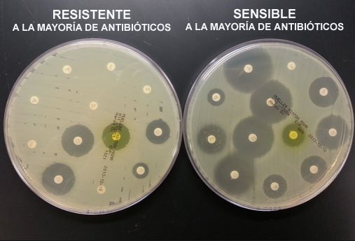 Apenas se comenzó a usar la penicilina se detectaron las primeras bacterias resistentes. Era solo el principio. #microMOOCSEM2 https://t.co/XDPcVAypNy