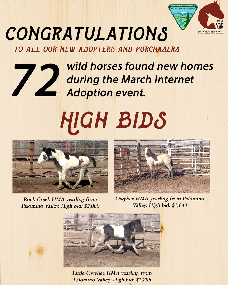 Blm Whb Program On Twitter The Next Wild Horse Internet Adoption Event Starts April 18 Get Started On Your Application Now Https T Co 9loj7hhtoy Https T Co Kbwbr4l0tc