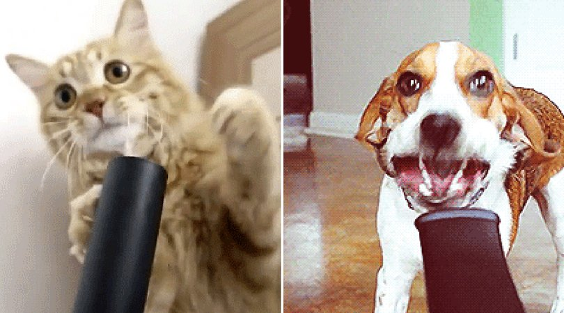 23 Pets Who Wish You Weren\'t About To