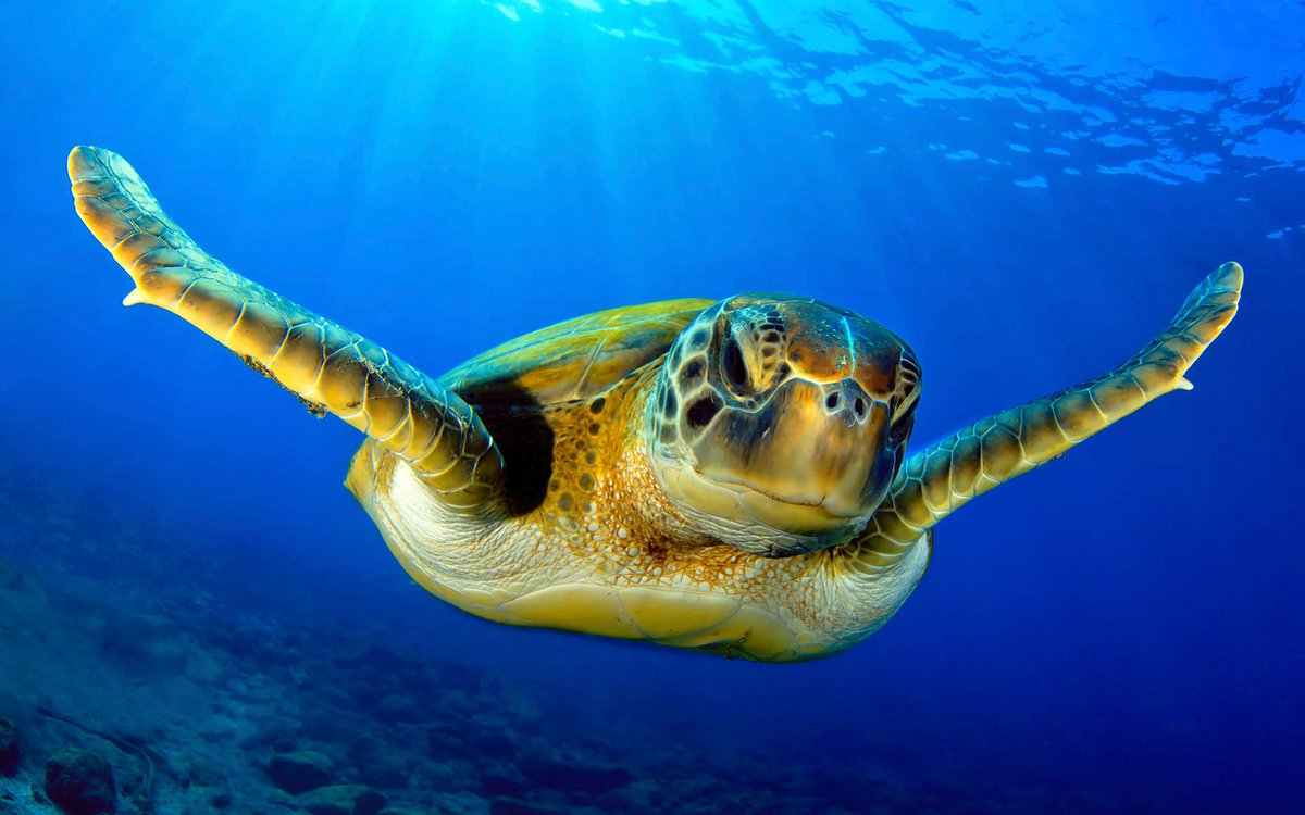 Andbeyond On Twitter May The Endangered Green Sea Turtle Continue To Escape Nest Extinction Travelandbeyond Oceanswithoutborders
