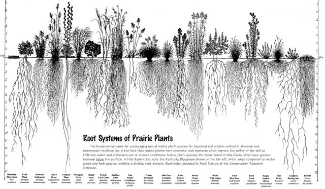 WHY PRAIRIES MATTER AND LAWNS DON'T ~ https://t.co/jPXsMBFXEu  ~ #ecosystem #environment https://t.co/QVIiXLqsRP
