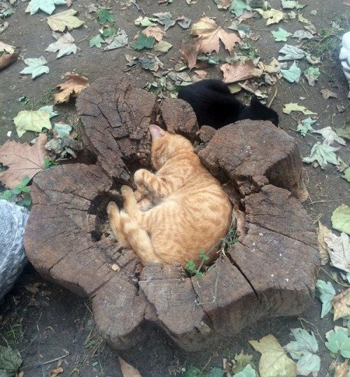 木から生まれました。