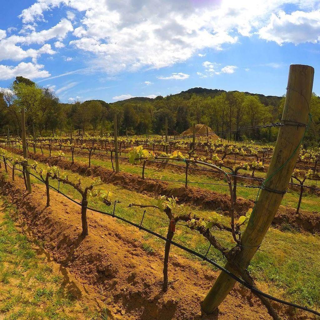 Enjoying the vines @SesVernes in Blanes. Always love walking a winery. #Travel https://t.co/rqQZ5nin0J https://t.co/LFFRIOAWJB