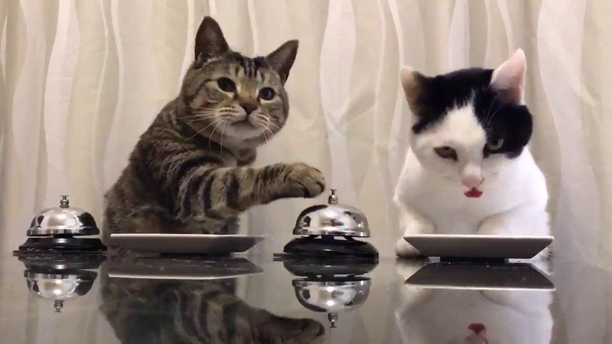 Cat Scared Won T Eat Unusual Behavior