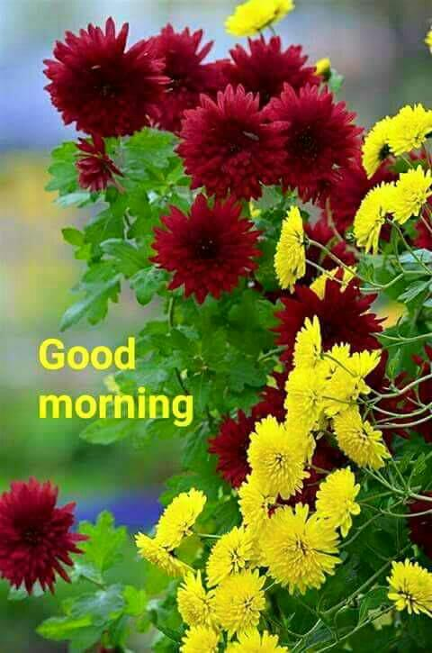 Daman Kumar Sharma On Twitter Good Morning Have A Very Nice Day My All Friends