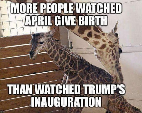 Of course, Trump would call this fake news. It's pretty bad when a giraffe is more popular than a president. https://t.co/h7kVPetq0e