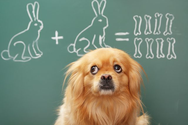 Study Shows Dogs Decieve Humans For Extra Treats At An Alarming Rate