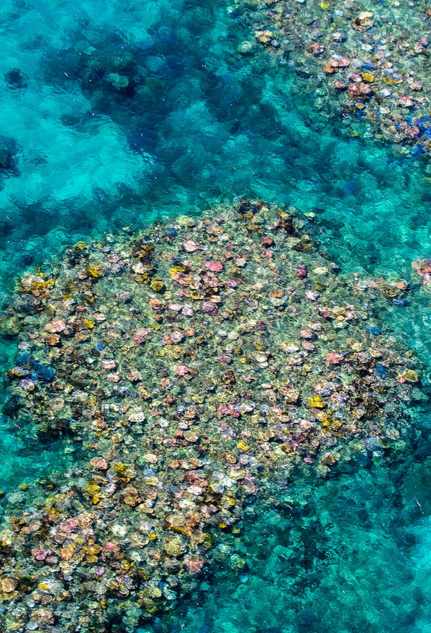 Natural Wonder & Paradise in Peril, I've dreamt of since I was a child-I finally get to experience you #GreatBarrierReef #LeavingOnAJetPlane