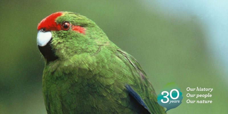 2006: Cats and rats are removed from Raoul Island, red-crowned kākāriki rapidly recolonise the island: https://t.co/27k1g1w7Wm #DOCturns30 https://t.co/ox5LKt39ul